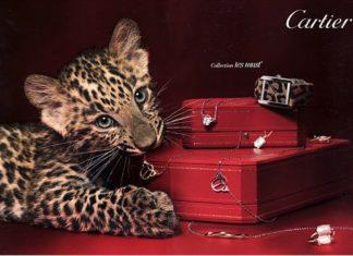 Кошачьи выкрутасы Cartier