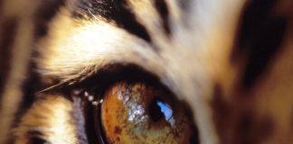 Самоцветы. Тигровый глаз